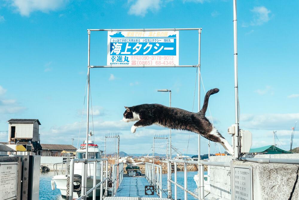 Manabeshima cat photo10