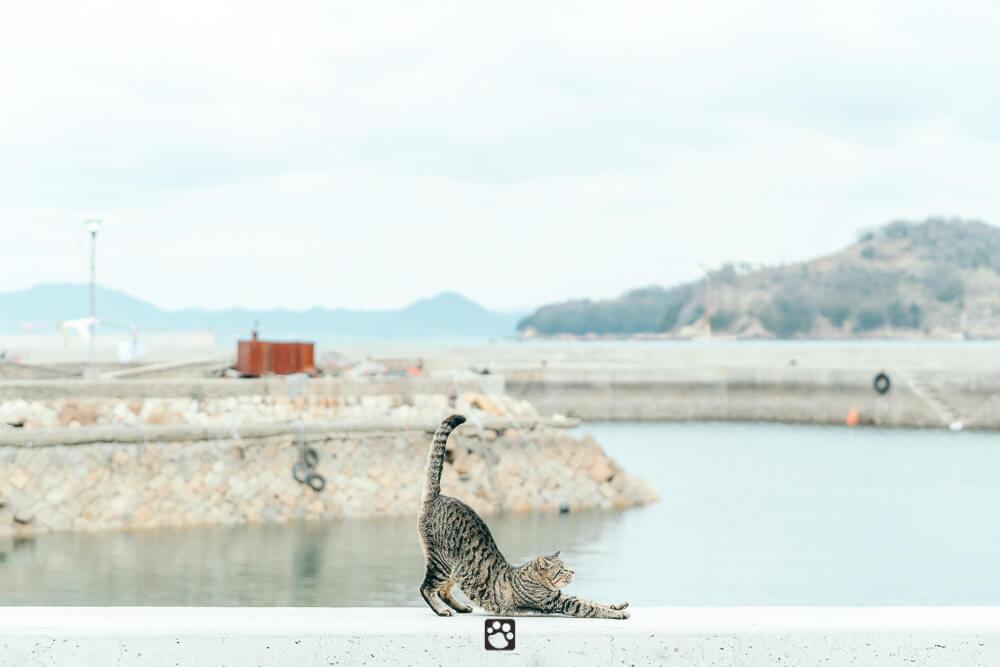 Manabeshima cat photo5
