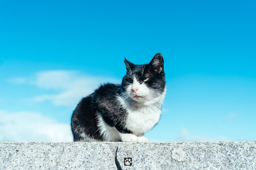 Manabeshima cat photo7