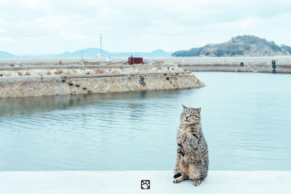 Manabeshima cat photo8