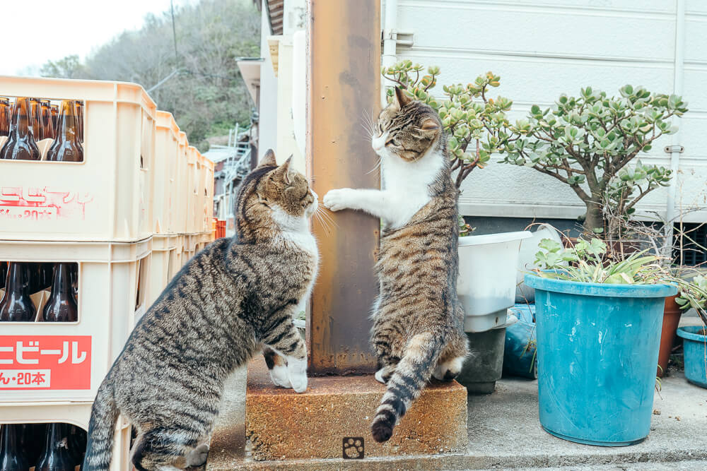 Manabeshima cat photo9