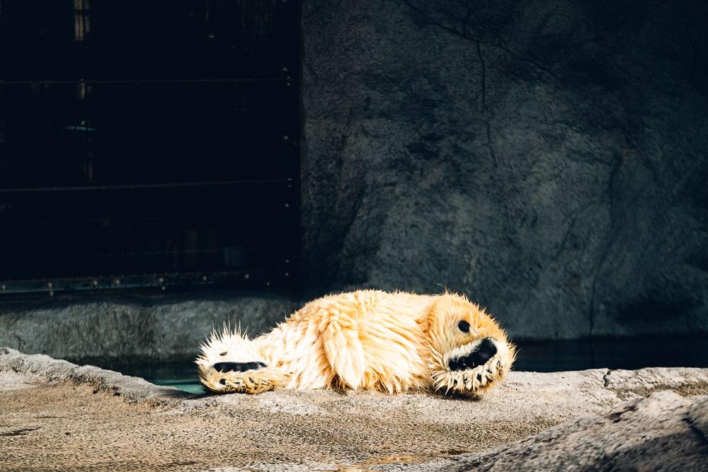 Asahiyama Zoo01