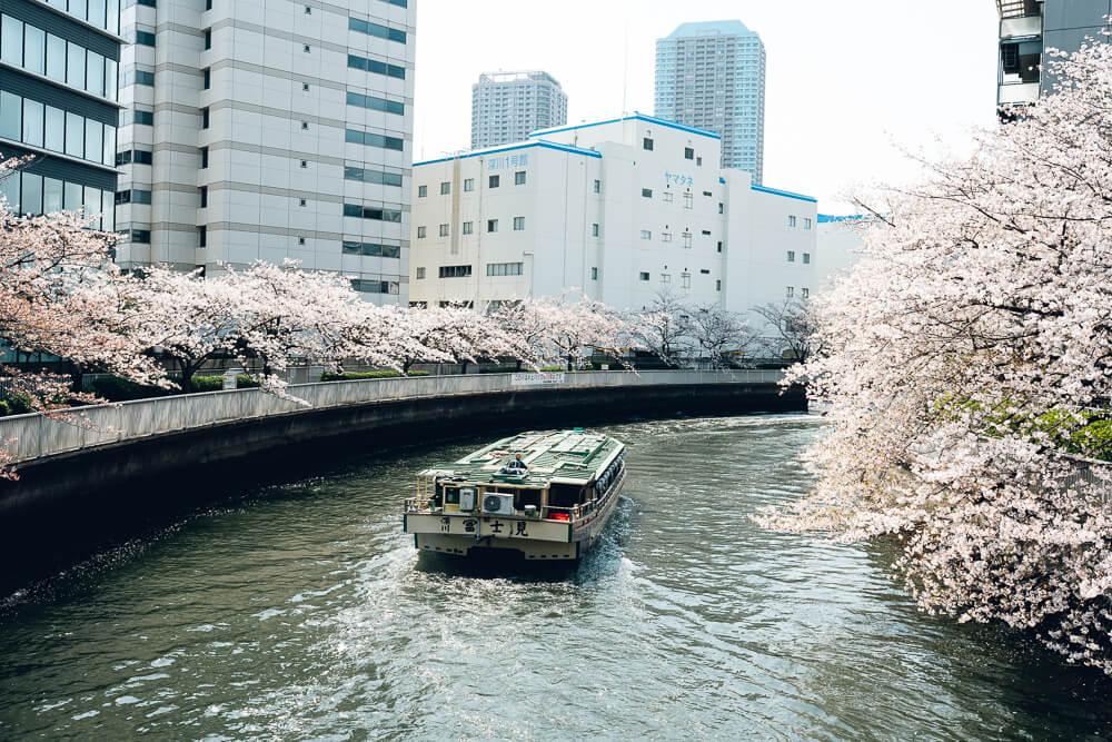 Cherry blossoms06