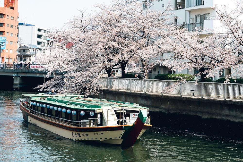 Cherry blossoms08