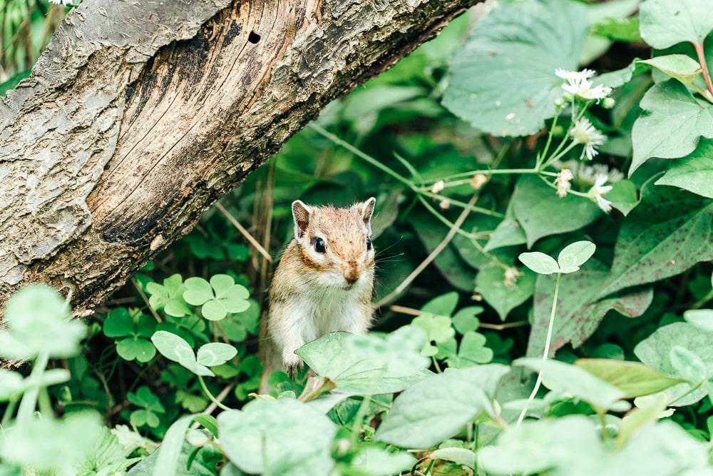 Machida Squirrel Garden01