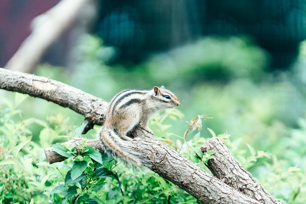 Machida Squirrel Garden02