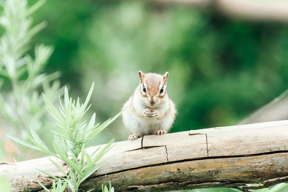Machida Squirrel Garden03
