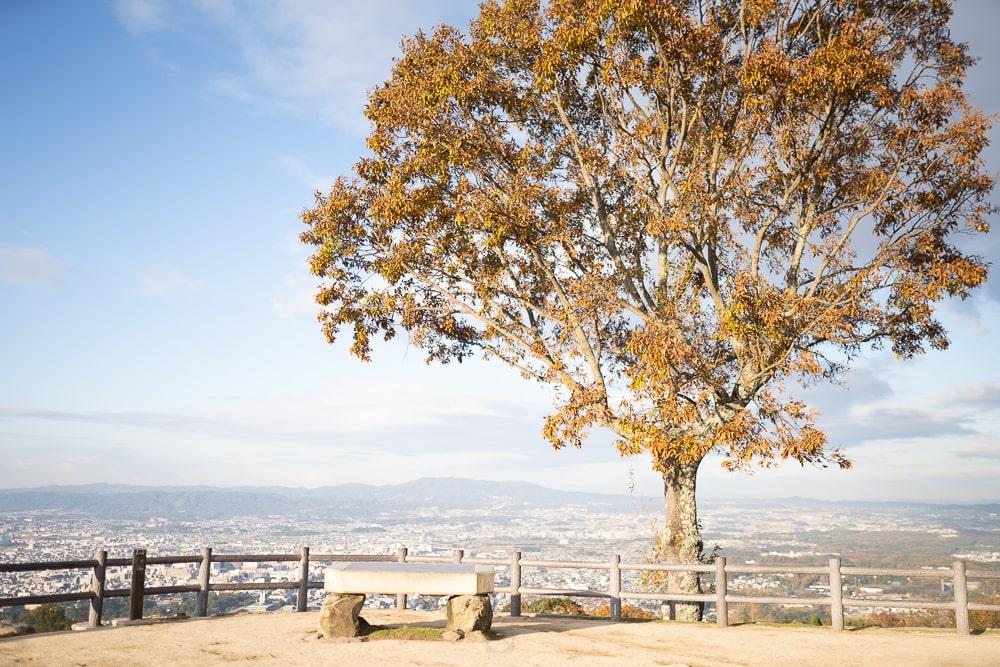 Nara mount wakakusa
