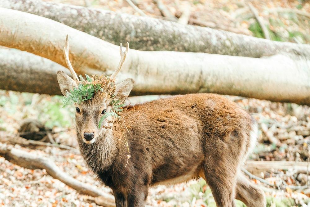 Nara park02