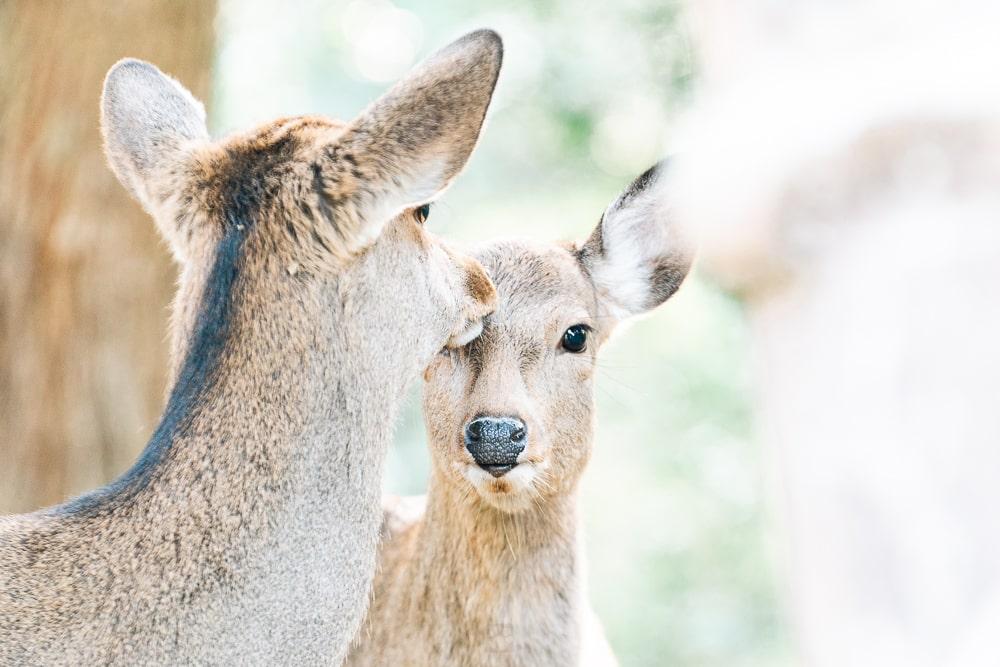 Nara park03