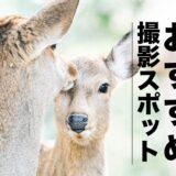 奈良のおすすめ撮影スポット