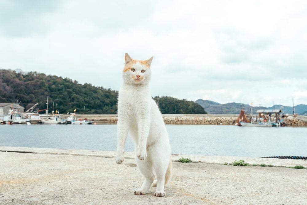 Okayama Manabeshima Island01