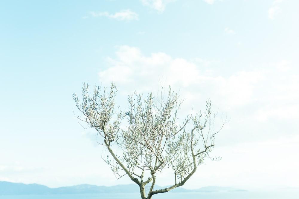 Okayama olive garden01